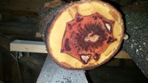 Apfelholz Querschnitt, mit Stock-Muster
